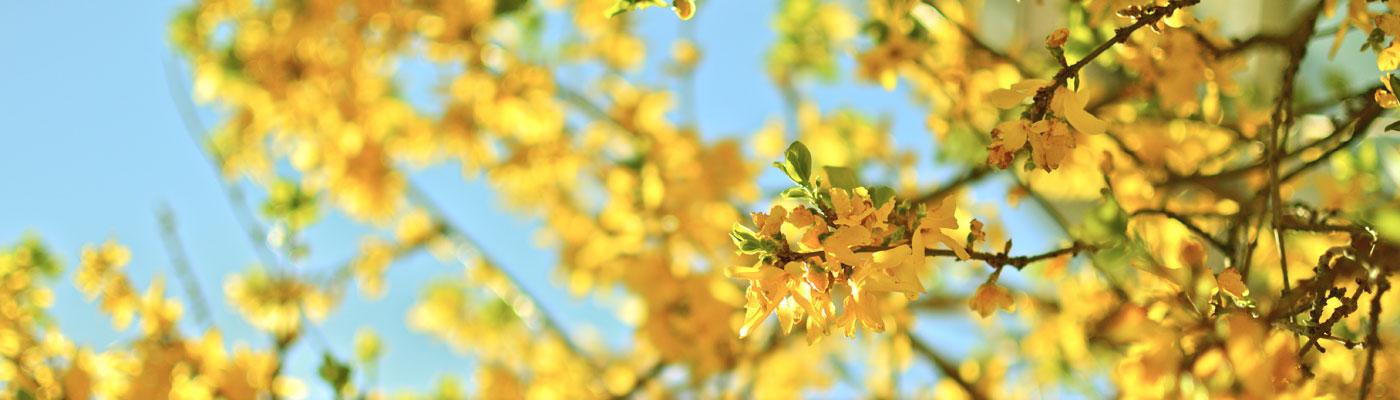 Ein Baum mit gelben Blüten